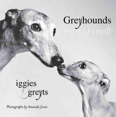 Greyhounds Big and Small: Iggies and Greyts (Paperback)
