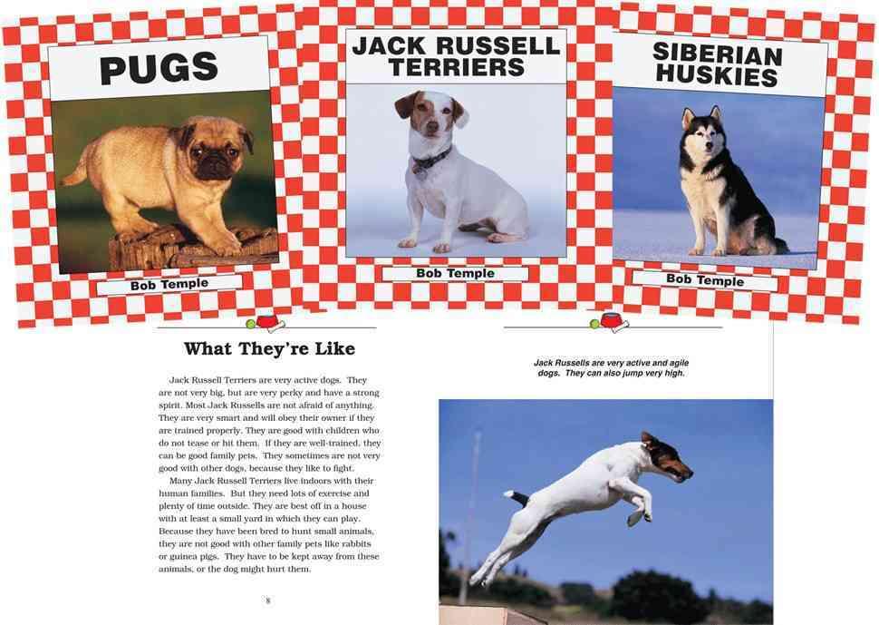 Dogs Set 3: Chihuahuas / Jack Russell Terriers / Scottish Terriers / Pugs / Shih Tzus / Siberian Huskies (Hardcover)
