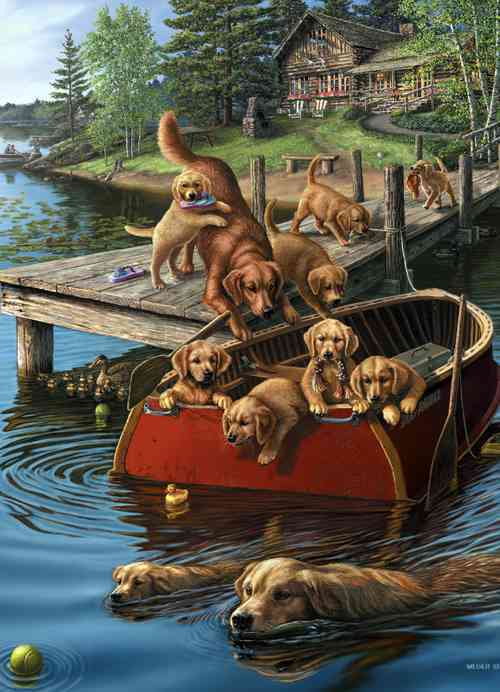 Dog Paddle: 1,000 Pieces (Novelty book)