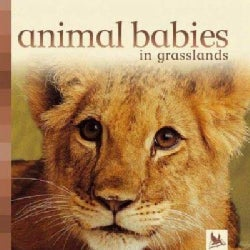 Animal Babies In Grasslands (Board book)