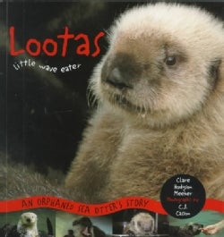 Lootas Little Wave Eater: An Orphaned Sea Otter's Story (Paperback)