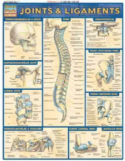 Joints and Ligaments (Cards)