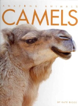 Camels (Hardcover)