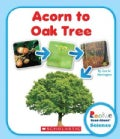 Acorn to Oak Tree (Hardcover)