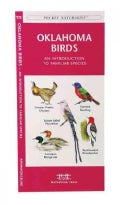 Oklahoma Birds: A Folding Pocket Guide to Familiar Species (Paperback)