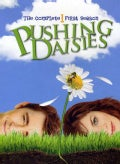 Pushing Daisies: The Complete 1st Season (DVD)