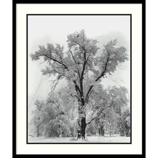 Ansel Adams 'Oak Tree, Snowstorm, Yosemite National Park-1948' Framed Art Print 27 x 32-inch