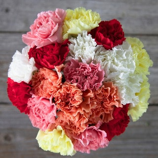 The Bouqs Volcano Collection 'Inspire' Original Carnation Bouquet