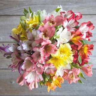 The Bouqs Volcano Collection Bold Single Alstroemeria Bouquet