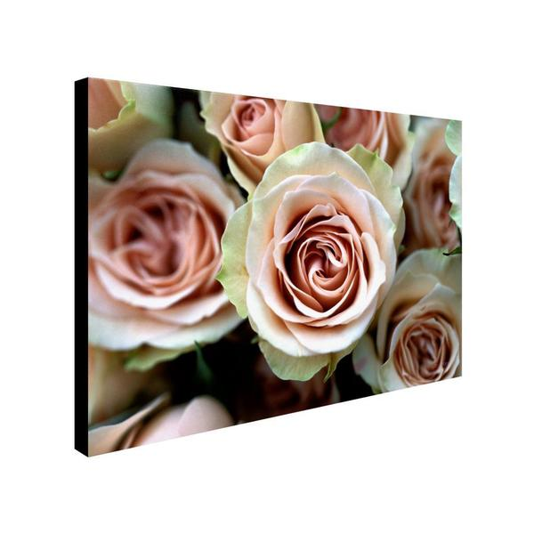 Kathy Yates 'Pale Pink Roses' Canvas Art Extra Large (As Is Item)