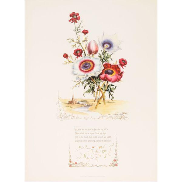 Shakespeares Flowers, Flos Adomis