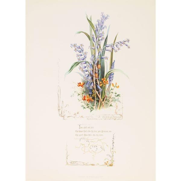 Shakespeares Flowers, Blue Bells