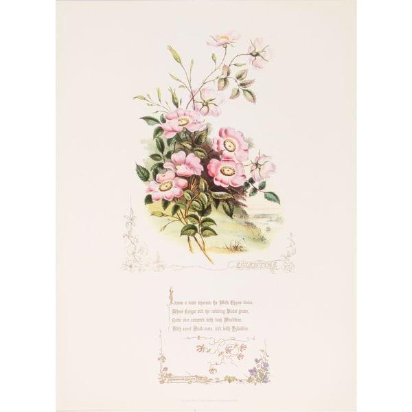 Shakespeares Flowers, Eglantine