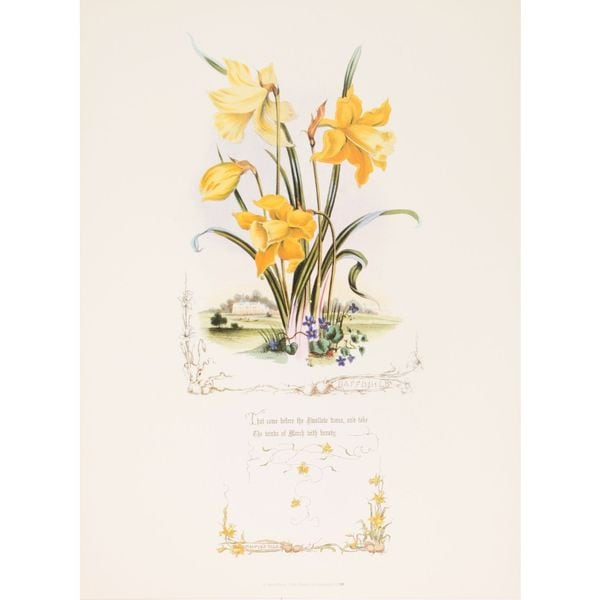 Shakespeares Flowers, Daffodils