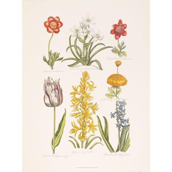 Botanical, John Hill