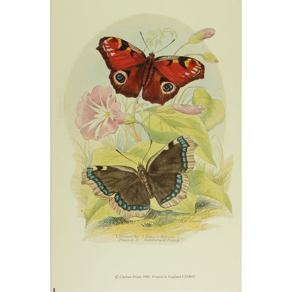 19th-C. Vanessa Peacock
