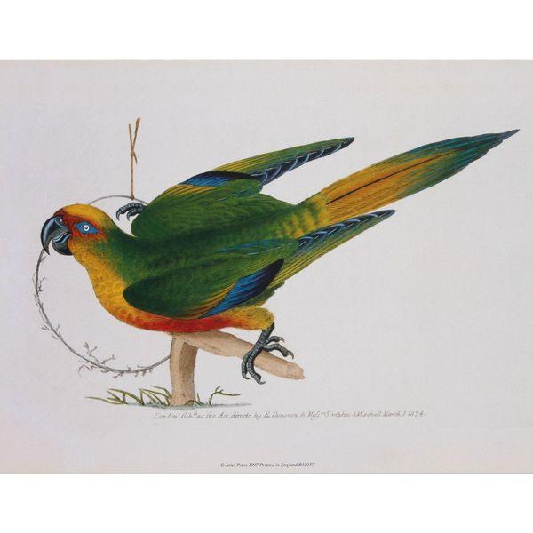 Parrot 1, E. Donovan