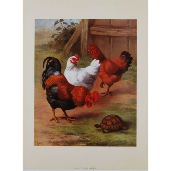 Chickens & Tortoise, E. Hunt