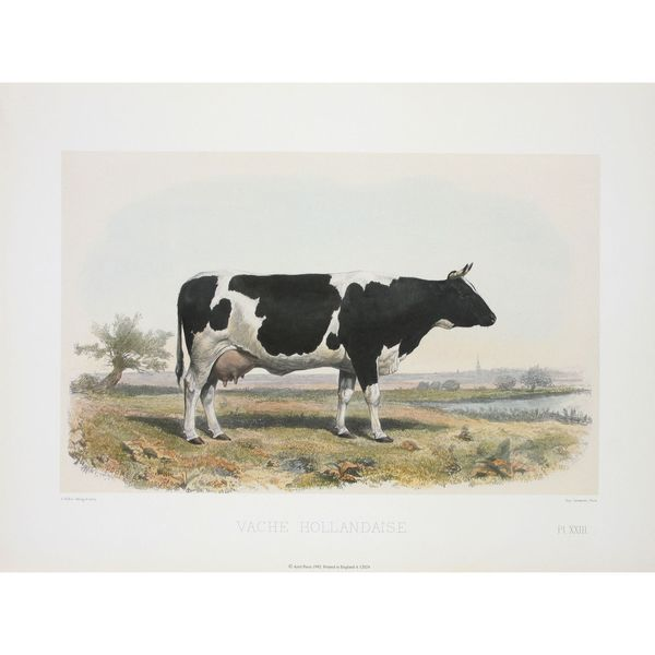 Vache Hollandaise, David Low