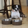 Capri Dog Bowls