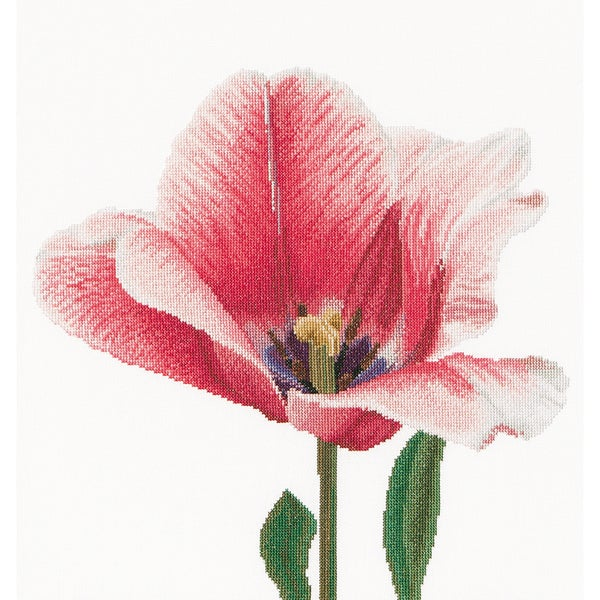 Pink Darwin Hybrid Tulip On Aida Counted Cross Stitch Kit13.5inX14.25in 18 Count