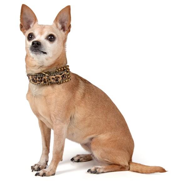 Journee Pet Rhinestone Animal Print Leather Dog Collar
