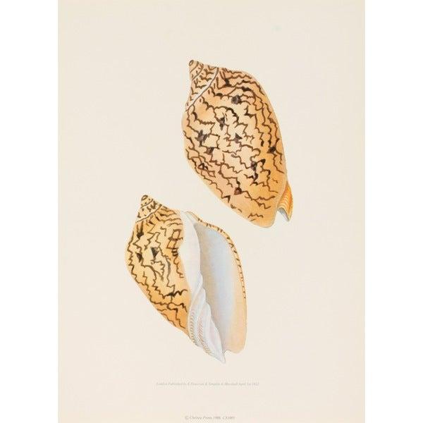 Seashell IV, E. Donovan Print Art