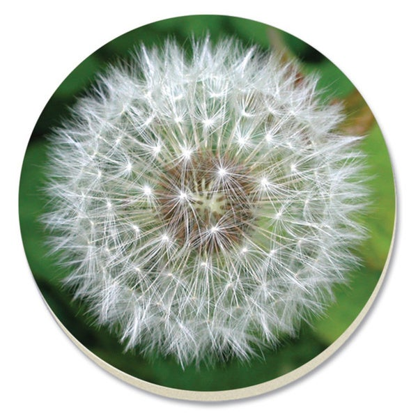 Absorbent Stone Dandelion Coaster (Set of 4)