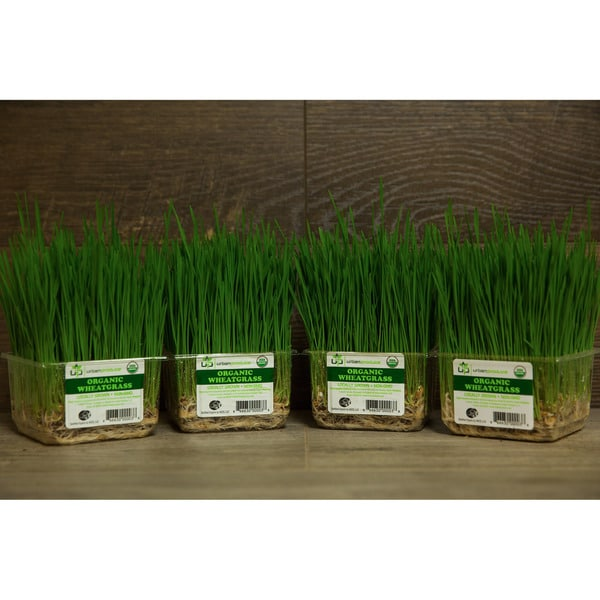 Urban Produce Certified Organic Live Wheatgrass (Pack of 4)