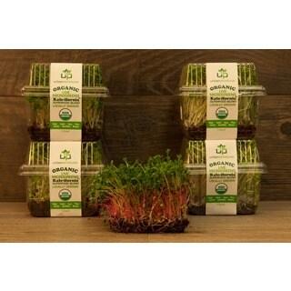 Urban Produce Certified Organic Living Kale-ifornia Microgreens (Pack of 4)