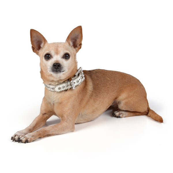 Journee Pet Rhinestone Leather Dog Collar