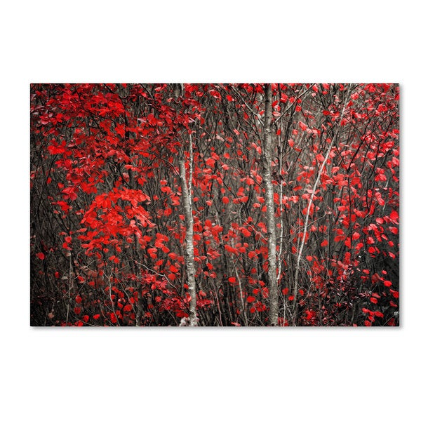 Philippe Sainte-Laudy 'The Hush Before Winter' Canvas Art