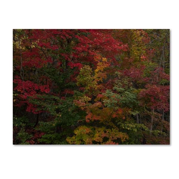 Kurt Shaffer 'Why I Love Autumn' Canvas Art