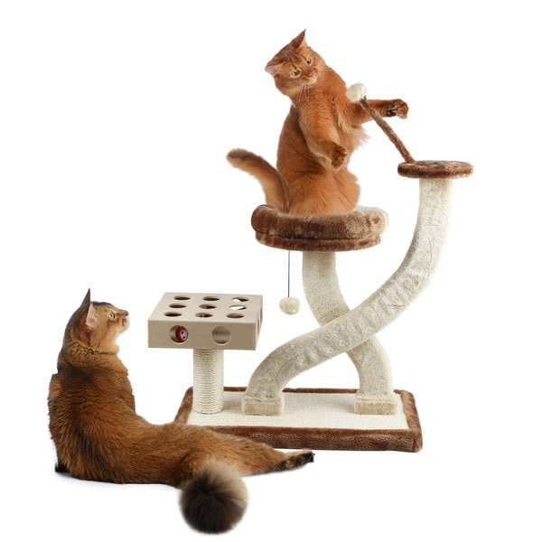 Cat Playground with Cat- IQ Busy Box