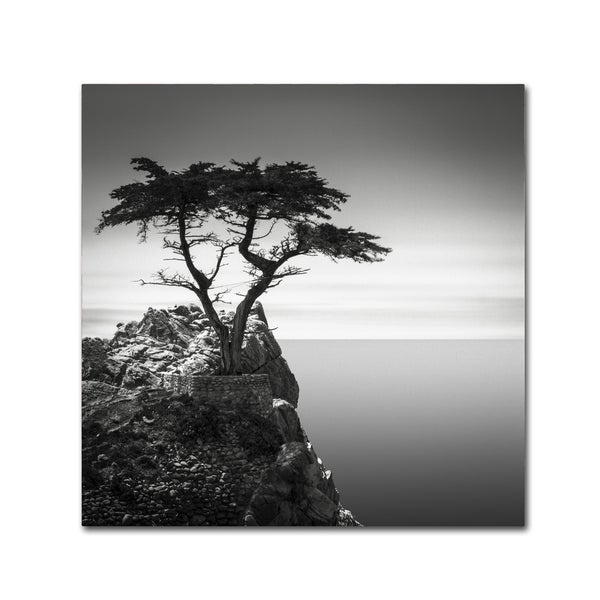 Dave MacVicar 'The Lone Cypress' Canvas Art