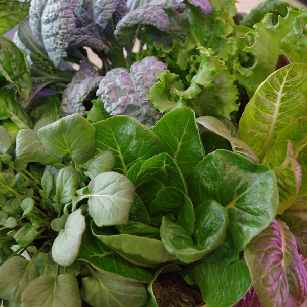 Greener Portions Aquaponics Salad and Herb Bundle (Local Delivery)