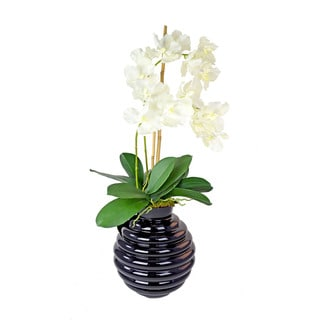White Vanda Orchid in Black Glass Vase