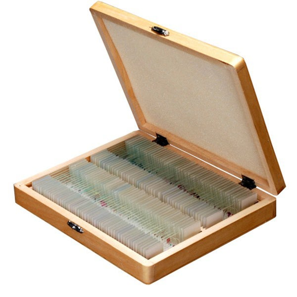100 Anatomy Botany Prepared Microscope Slides - Set D