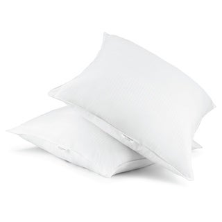Cotton Euro Square 28 x 28 Down Alternative Pillow (Set of 2)