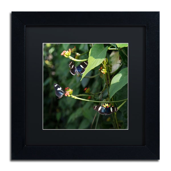 Kurt Shaffer 'Sara Longwing Butterflies' Black Framed Canvas Wall Art