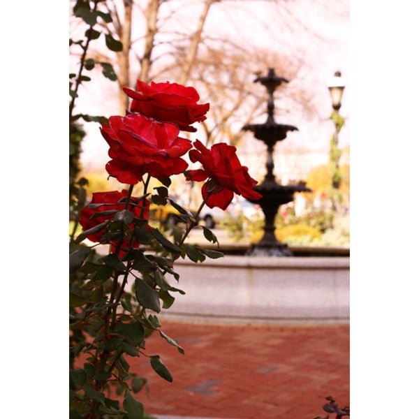 Rose Fountain Print Wall Art