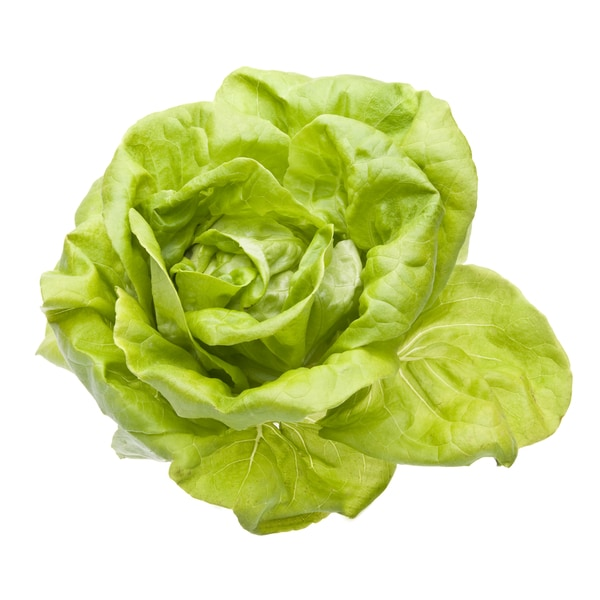 This Week's Harvest Local Hydroponic Green Bibb Lettuce (Local Delivery)