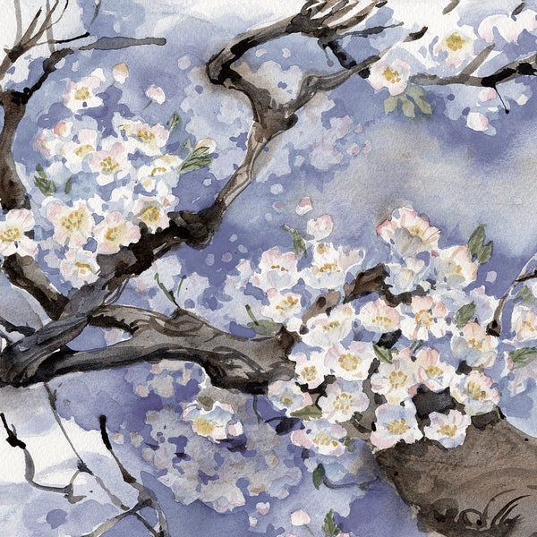 Paul Brent 'Cherry Blossom Blush pastel(-47sat) square crop' 24x24 Framed Canvas Wall Art