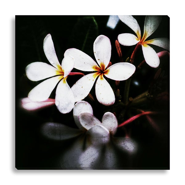 New Era Photography 'White Blossom' Canvas Gallery Wrap
