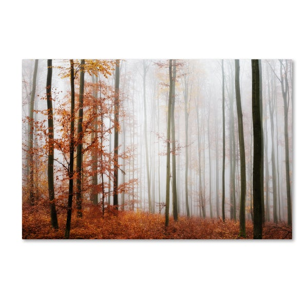 Philippe Sainte-Laudy 'Forest Corner' Canvas Art