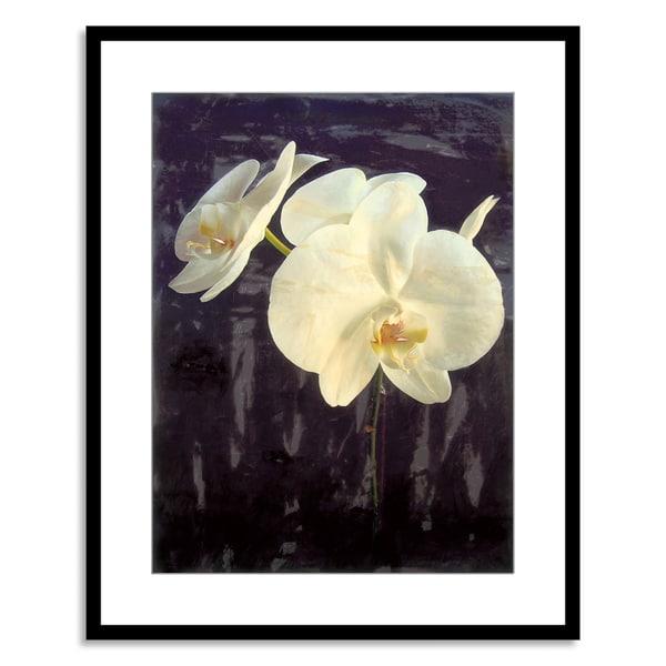Sara Abbott 'Midnight Garden I' Paper Framed