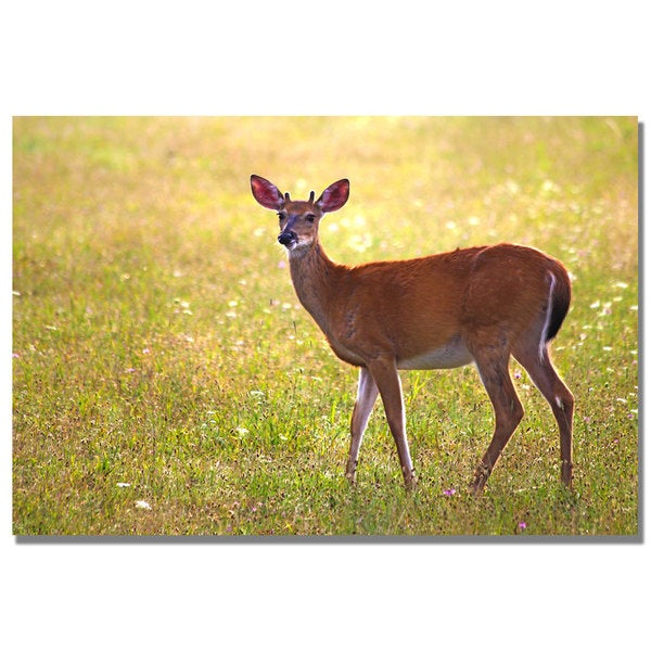 CATeyes 'Young Buck' Canvas Art