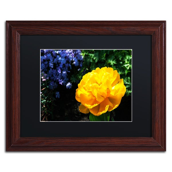 Kurt Shaffer 'Yellow Double Headed Tulip' Black Matte, Wood Framed Wall Art