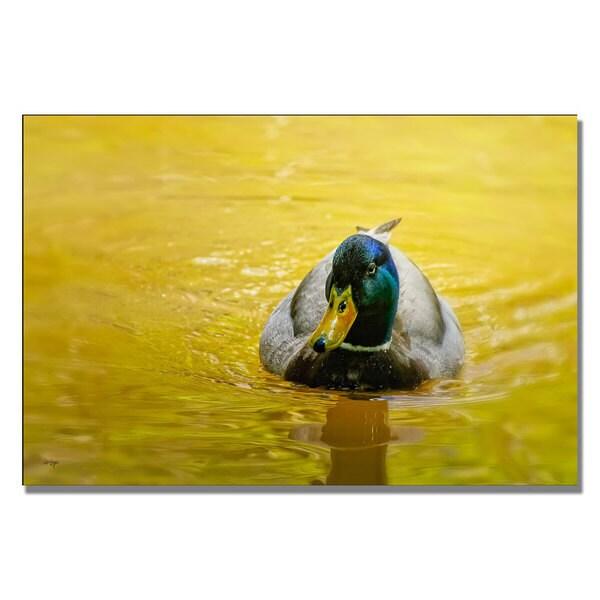 Lois Bryan 'Mallard on Golden Pond' Canvas Art