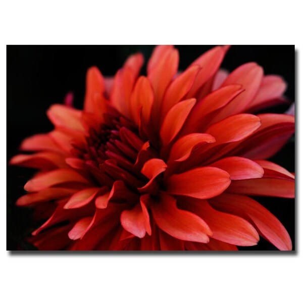 Red Dhalia by Kurt Shaffer-Gallery Wrapped 14x19 Canvas